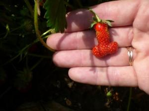 Look what I grew for your in my ho garden!